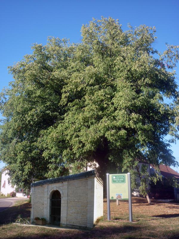 Journées du patrimoine 2019 - Visite du village de Magny-les-Aubigny