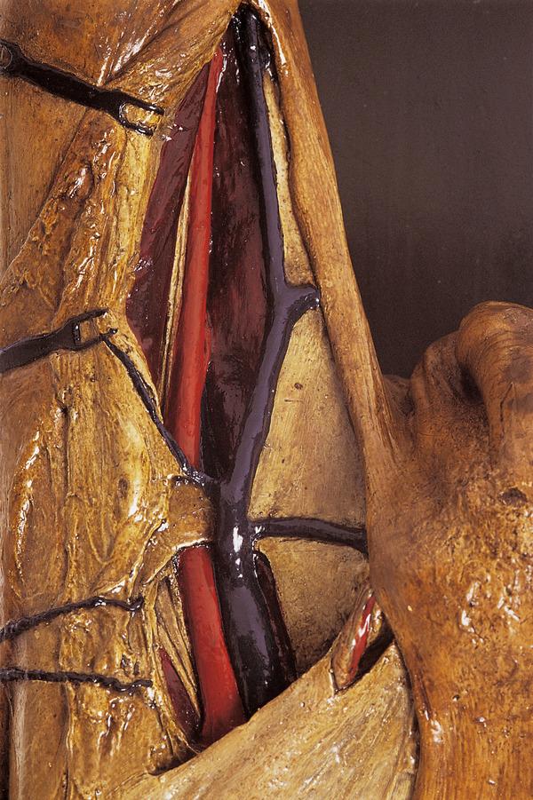 Nuit des musées 2019 -Institut d'anatomie normale
