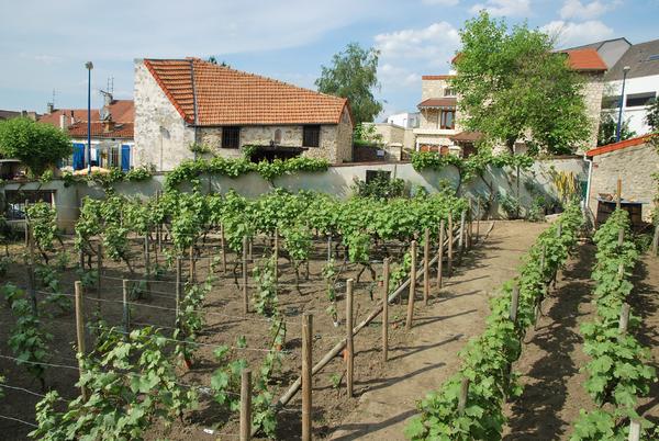 Journées du patrimoine 2017 - Visite commentée : Historique de la vigne à Clamart et de la ruralité au XIXe siècle