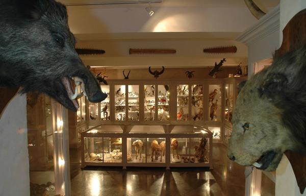 Nuit des musées 2018 -Musée Chintreuil