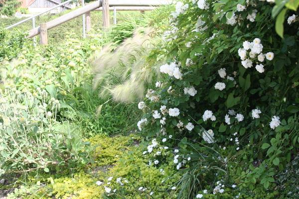 Rendez Vous aux Jardins 2018 -Le Jardin du livre