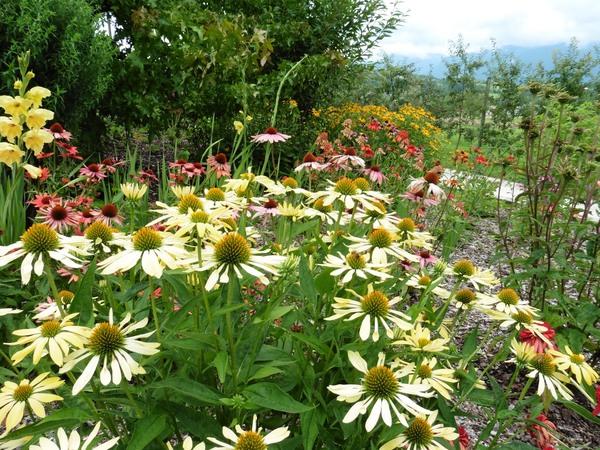 Rendez Vous aux Jardins 2018 -En passant par le jardin