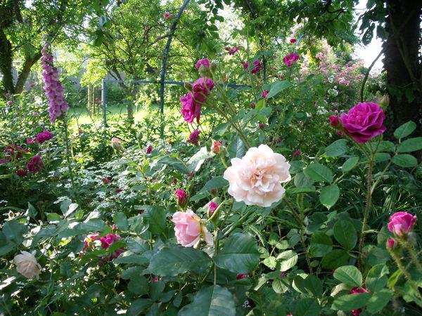Rendez Vous aux Jardins 2018 -Jardin de Marlène