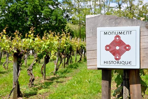 Journées du patrimoine 2017 - Visite guidée de la parcelle de vigne inscrite aux monuments historiques