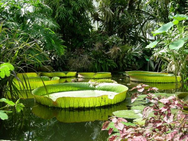 Journées du patrimoine 2019 - Visite libre des serres tropicales