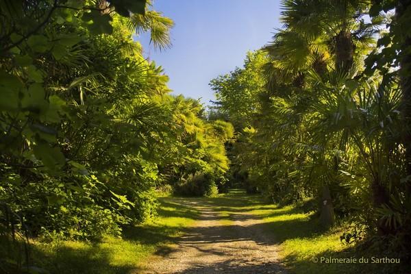 Rendez Vous aux Jardins 2018 -Palmeraie du Sarthou