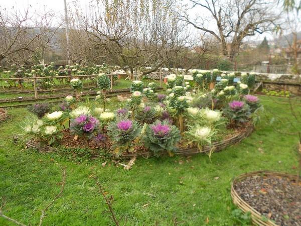 Rendez Vous aux Jardins 2018 -Jardins familliaux du moulin de la Porte
