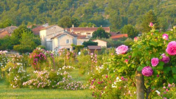 Rendez Vous aux Jardins 2018 -Roseraie des Pommiers