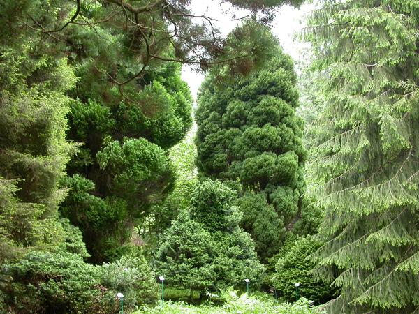 Rendez Vous aux Jardins 2018 -Arboretum Henri-Gaussen