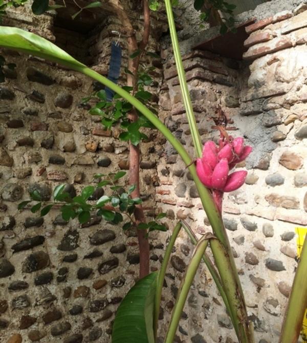Rendez Vous aux Jardins 2018 -Les Jardins du château de Momas