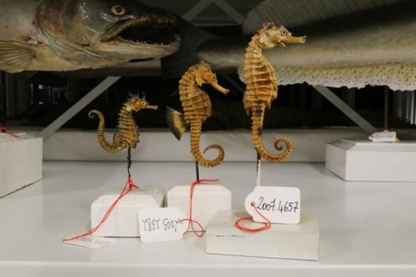 Crédits image : ©Centre de Conservation des Collections du Muséum d'Histoire naturelle