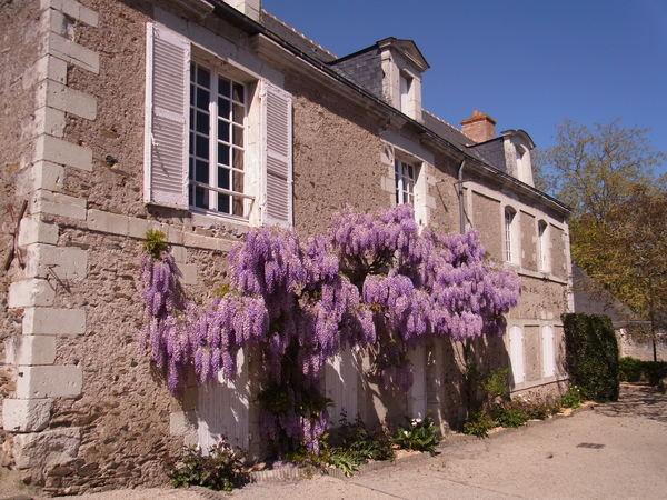 Crédits image : Mairie de Savennières