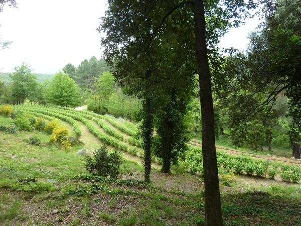 Rendez Vous aux Jardins 2018 -Jardins de Mazet