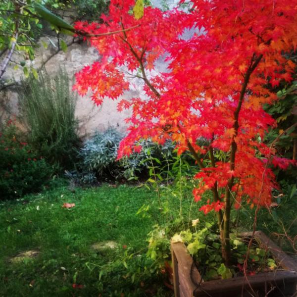 Rendez Vous aux Jardins 2018 -Le jardin caché