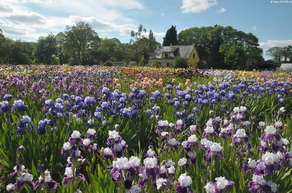 Rendez Vous aux Jardins 2018 -Jardin d'iris