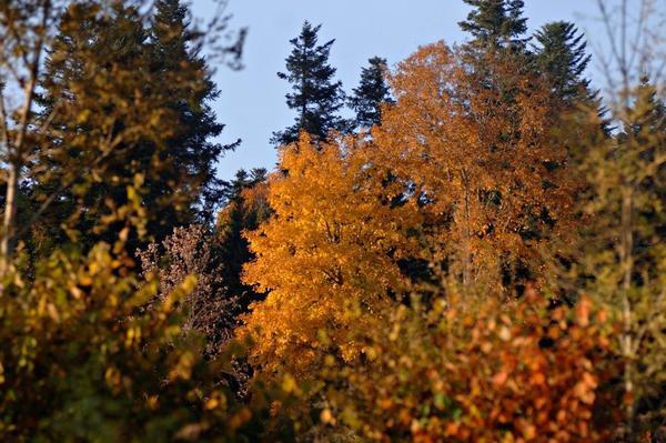 Rendez Vous aux Jardins 2018 -Arboretum du Lavot