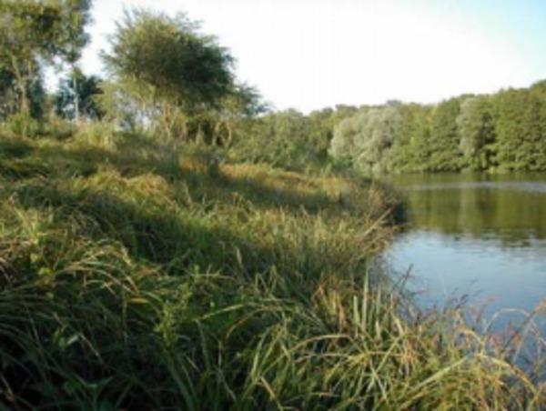 Journées du patrimoine 2020 - À la découverte du patrimoine naturel et de sa biodiversité sur un étang de Grand Paris Sud
