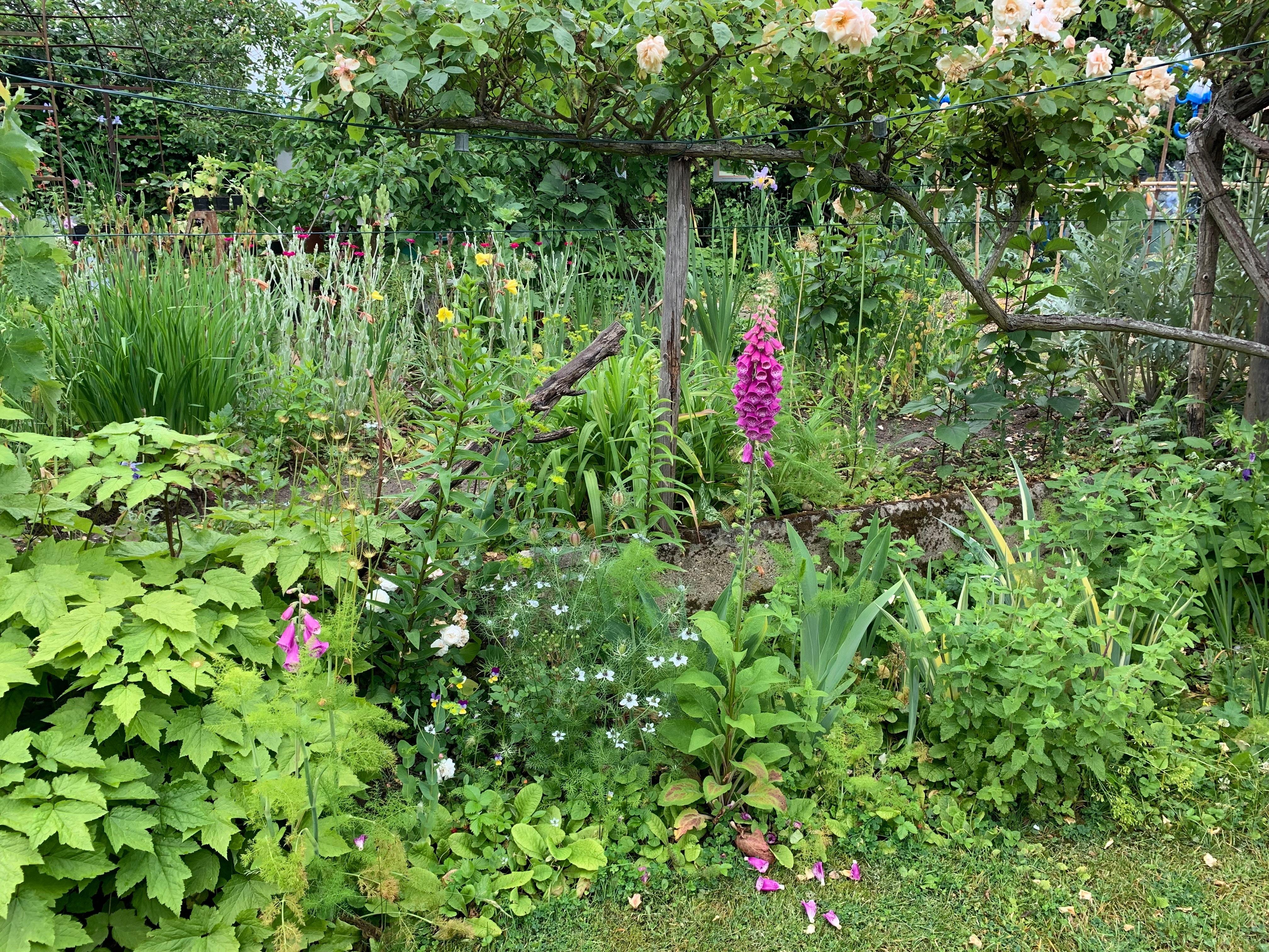 Jardin de Monique Petit