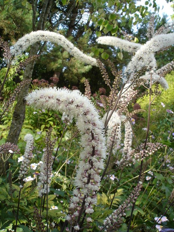 Rendez Vous aux Jardins 2018 -Un jardin pour tous les sens