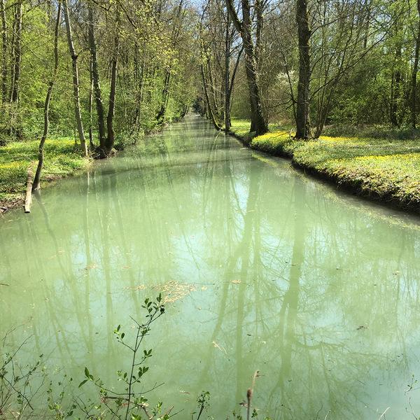 Rendez Vous aux Jardins 2018 -Parc du château de Juzennecourt