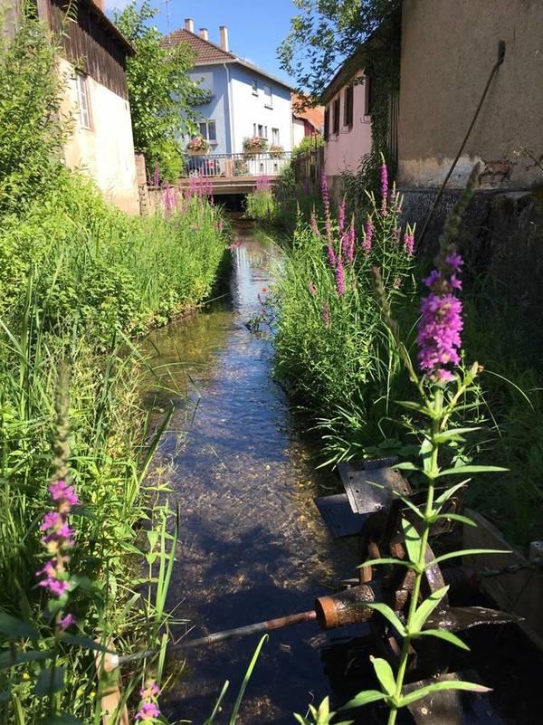 Rendez Vous aux Jardins 2018 -Jardin Langert, 2 Rue Langert, Muttersholtz