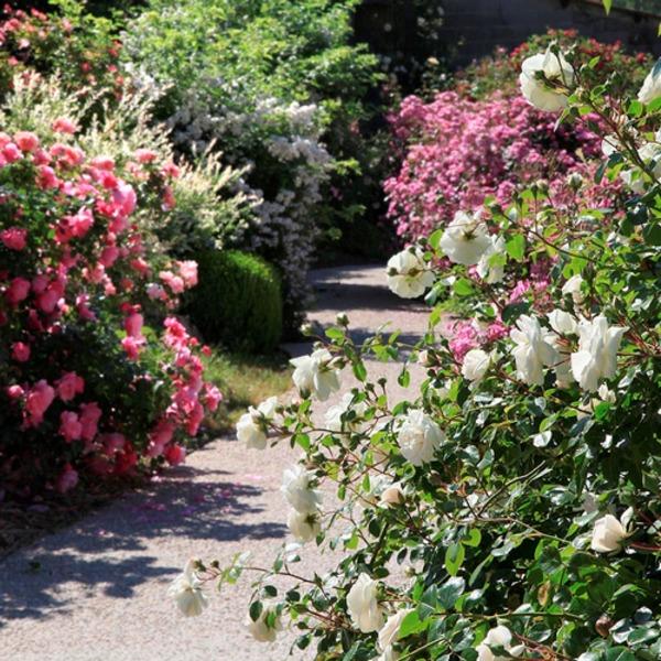 Rendez Vous aux Jardins 2018 -Roseraie de Saint-Vincent