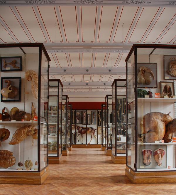 Nuit des musées 2018 -Musée Fragonard - École nationale vétérinaire
