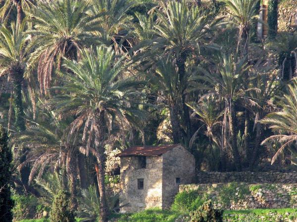 Palmeraie de Bordighera