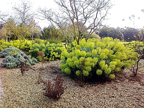 Rendez Vous aux Jardins 2018 -Parc Franck Delmas