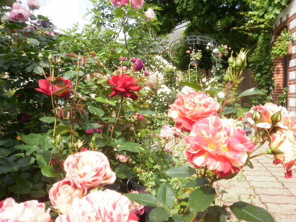 Rendez Vous aux Jardins 2018 -La closeraie - jardin de roses