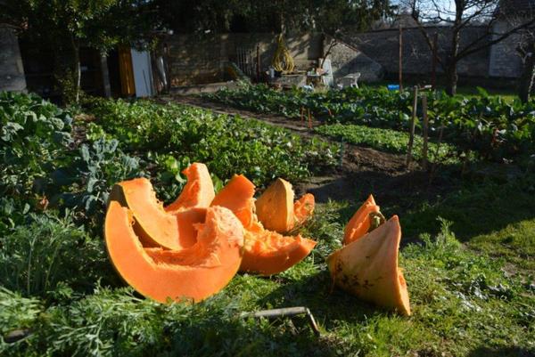 Rendez Vous aux Jardins 2018 -Jardin Partagé