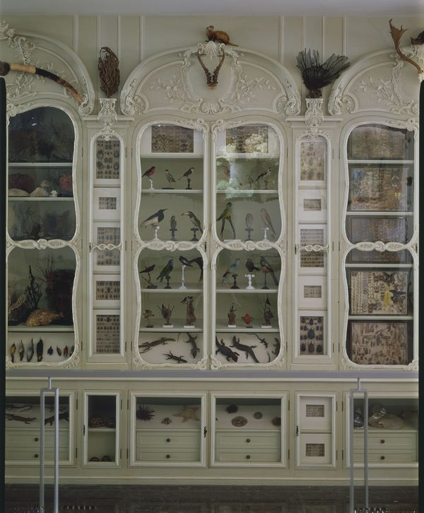 Crédits image : Cabinet de curiosité Bonnier de la Mosson, crédit : Muséum national d'histoire naturelle
