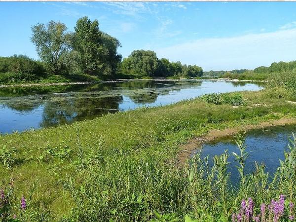 Crédits image : Loiret Nature Environnement