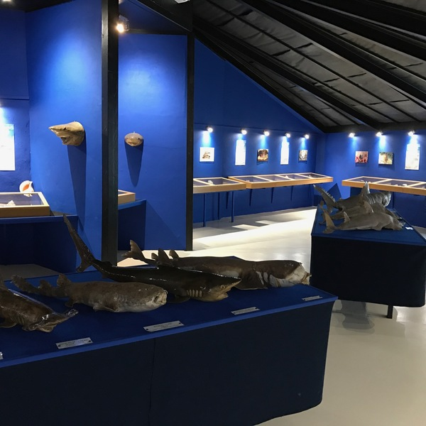 Crédits image : Musée de la mer