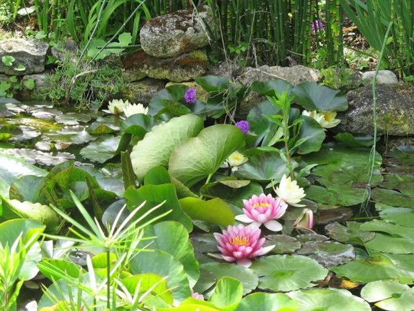 Rendez Vous aux Jardins 2018 -Les Jardins de la Boirie