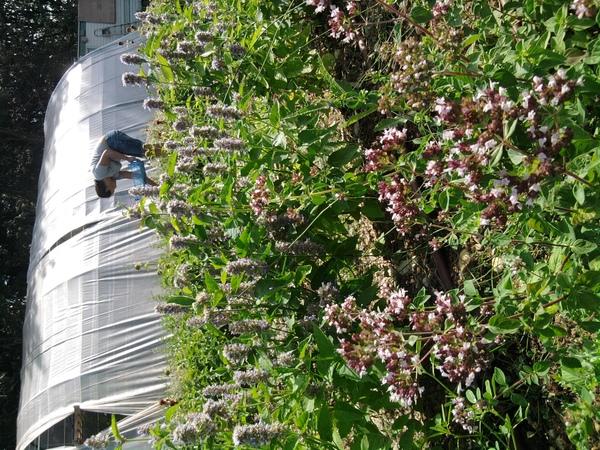 Journées du patrimoine 2018 - Visite commentée du jardin des aromatiques, suivie d'une dégustation des produits
